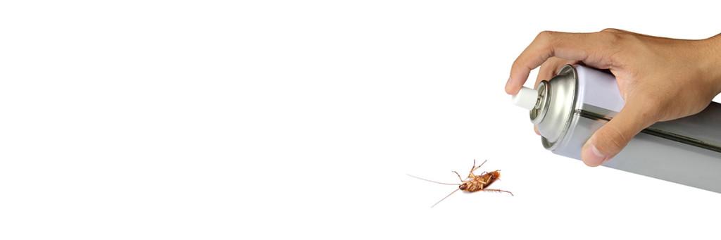 För att bekämpa kackerlackor behövs profisionell hjälp.